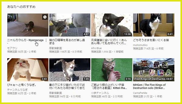 犬猫Youtube